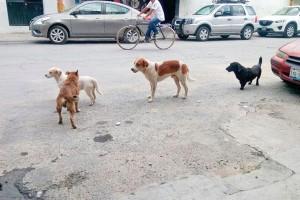 j13-perros-callejeros1-1-600x400